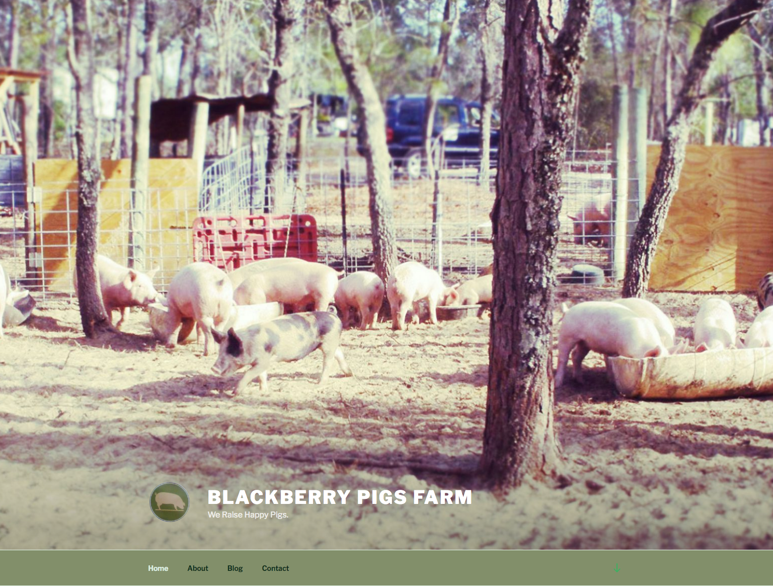 Website, Blackberry Pig
